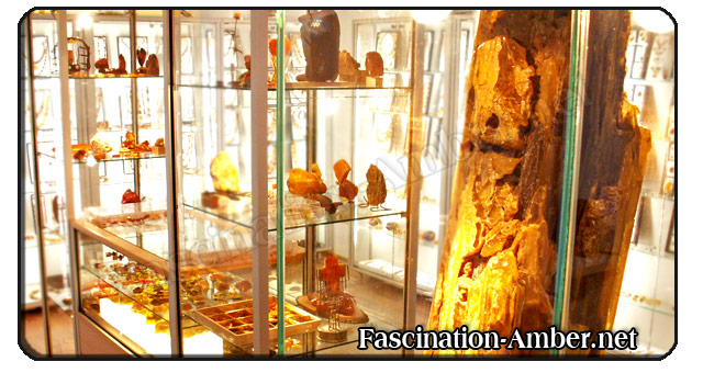 Amber Museum & Shop